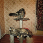 Ева и Еся IMG_34_JPG