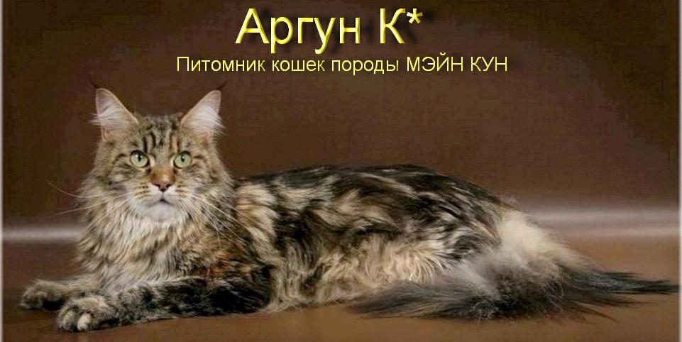 Питомник кошек породы мейн-кун (мэйн кун)