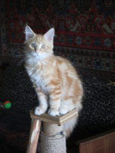фото от 26 июля котята Д (5)