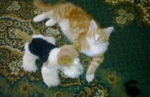 Винсент и собачка.1
